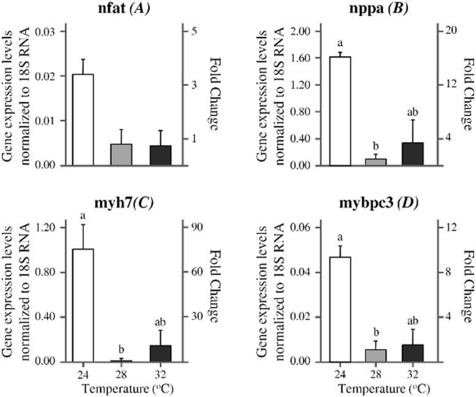 Developmental Temperature Has Persistent Sexually Dimorphic Effects