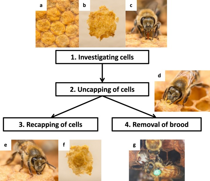 career bees guide