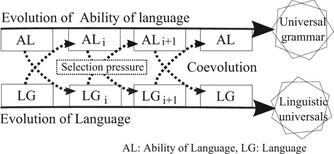 821abb77d8c2 The upper arrow represents the evolution of language ability in general.  The lower arrow represents the evolution of language itself.