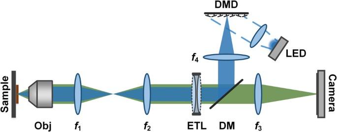 Video-rate volumetric neuronal imaging using 3D targeted