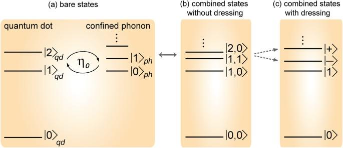 Polarons Explain Luminescence Behavior of Colloidal Quantum