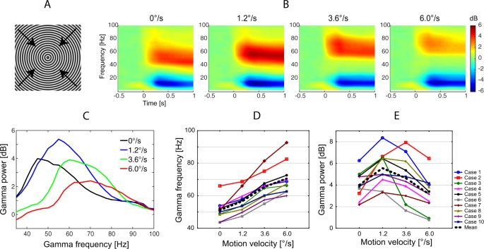 Input-dependent modulation of MEG gamma oscillations
