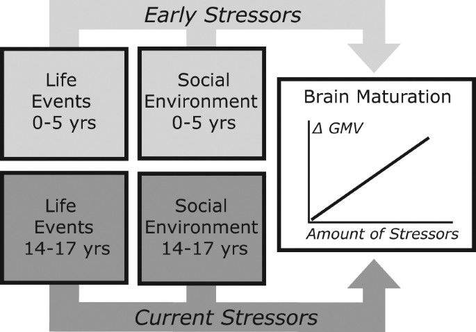 Early Life And Pubertal Stress Differentially Modulate Grey Matter