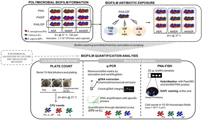 Quantitative assessment of individual populations within ... 8ee0c1ad69