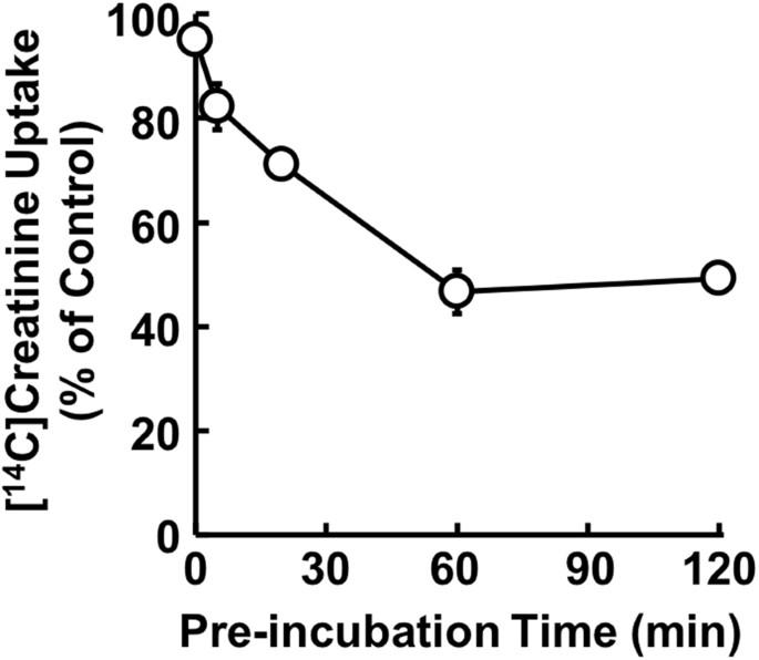 Effect Of Tyrosine Kinase Inhibitors On Renal Handling Of Creatinine By Mate1 Scientific Reports
