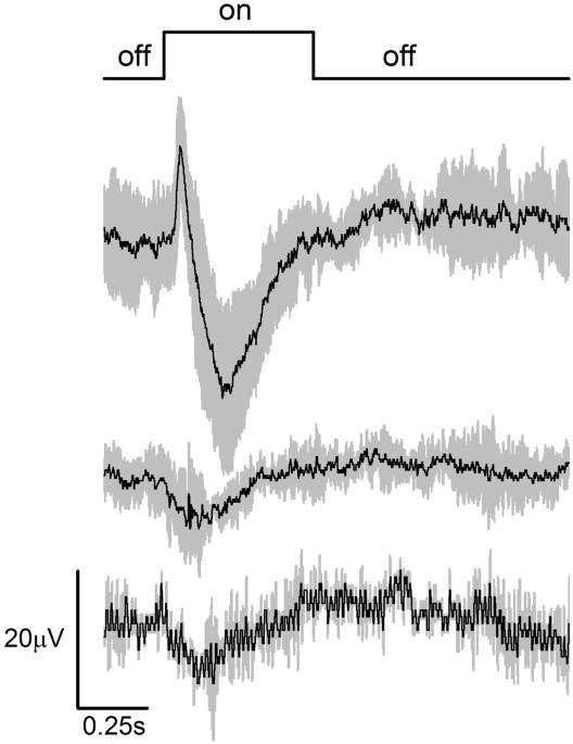 Cerebral photoreception in mantis shrimp | Scientific Reports