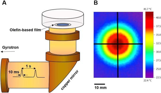 Actin polymerization is activated by terahertz irradiation