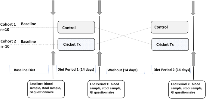 Impact of Edible Cricket Consumption on Gut Microbiota in Healthy Adults, a Double-blind, Randomized Crossover Trial