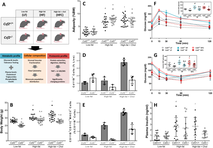 Gm Csf Driven Myeloid Cells In Adipose Tissue Link Weight Gain And