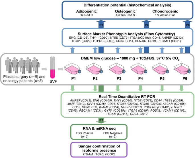 Immunophenotyping and transcriptional profiling of in vitro