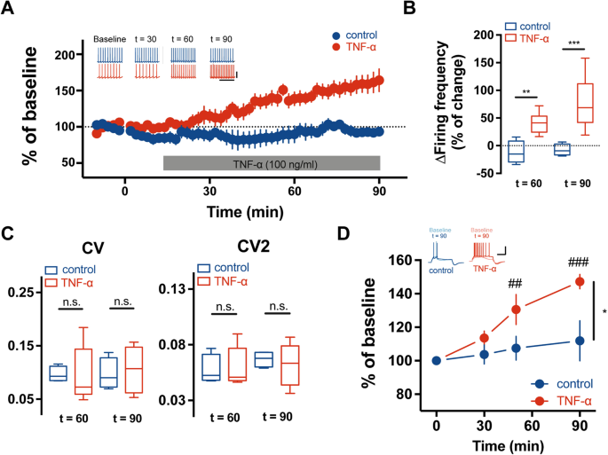 TNF-α increases the intrinsic excitability of cerebellar