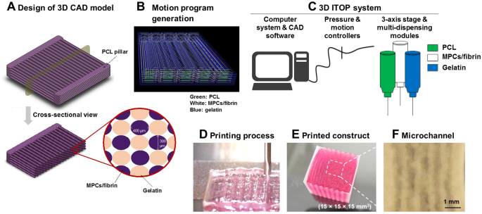 3D Bioprinted Human Skeletal Muscle Constructs for Muscle