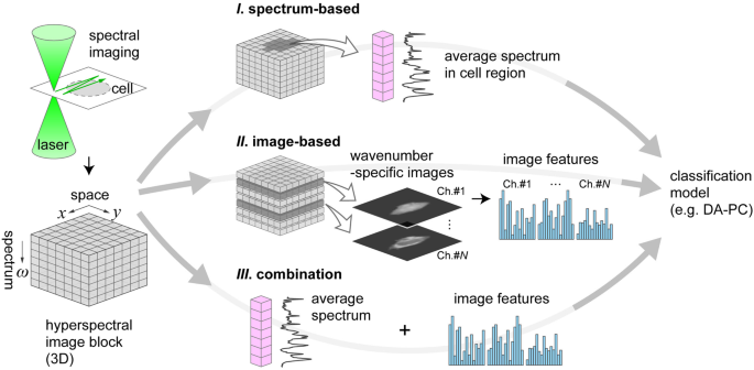 Cell Type Discrimination Based On Image Features Of Molecular
