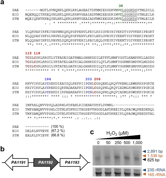 Multiple Alignment Of P Aeruginosa Ttca And Gene Organization Around A From With Sequences Escherichia