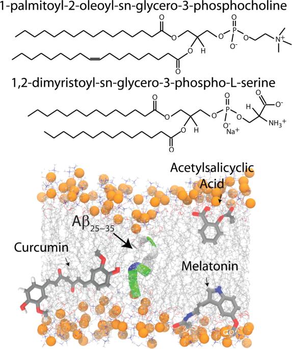 Schematic representations of 1-Palmitoyl-2-oleoyl-sn-glycero-3-phosphocholine (POPC), 1,2-Dimyristoyl-sn-glycero-3-phosphoserine (DMPS), Amyloid-β25–35 ...