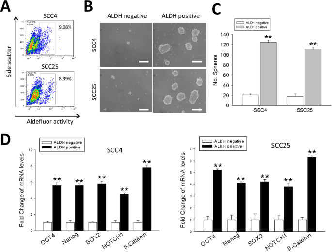 The Antihelminthic Niclosamide Inhibits Cancer Stemness