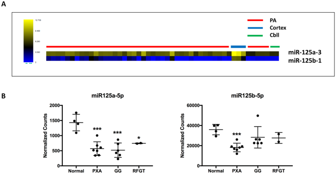 MicroRNA (miR) 125b regulates cell growth and invasion in