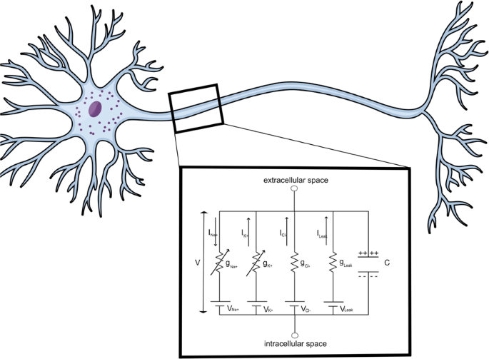 Modeling of inhomogeneous electromagnetic fields in the nervous system: a novel paradigm in understanding cell interactions, disease etiology and therapy