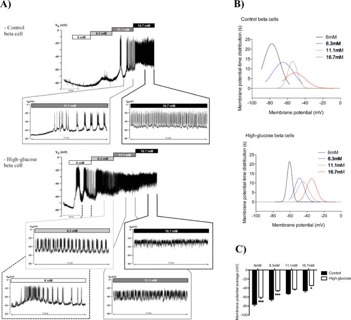 short term high glucose culture potentiates pancreatic beta cell