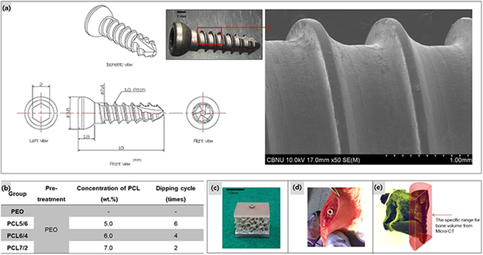 Improvement of osteogenesis by a uniform PCL coating on a