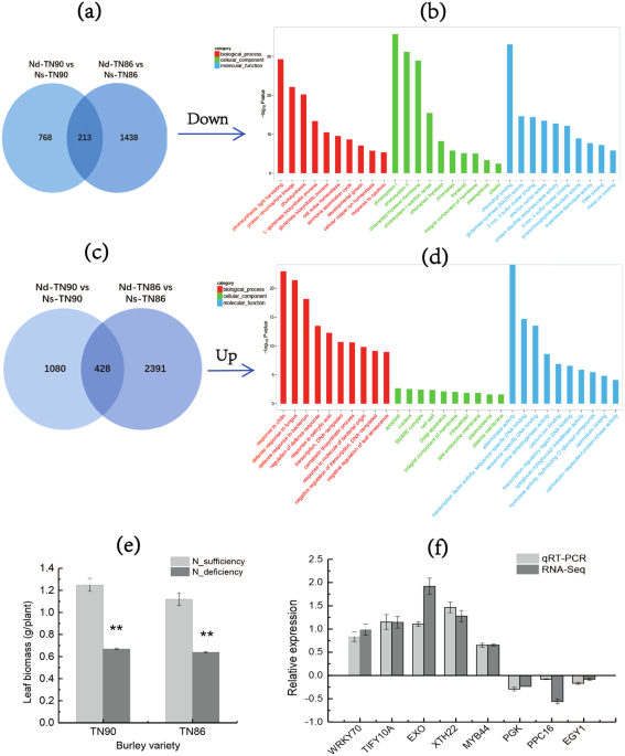 Metabolome and molecular basis for carbohydrate increase and nitrate transcriptome analysis strategies and go enrichment of target degs and leaf biomass a venn diagram of down regulated degs of deficient nitrogen condition ccuart Gallery
