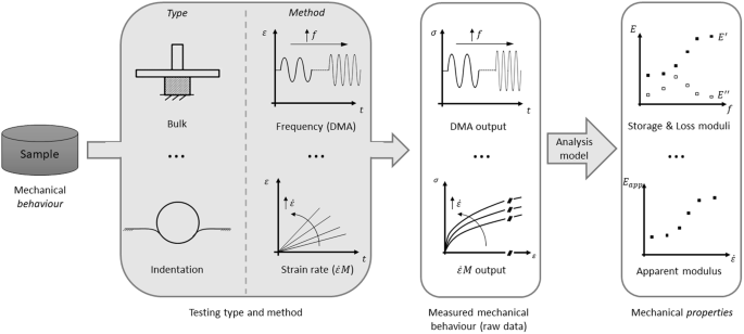 Comparison Of Frequency And Strain Rate Domain Mechanical
