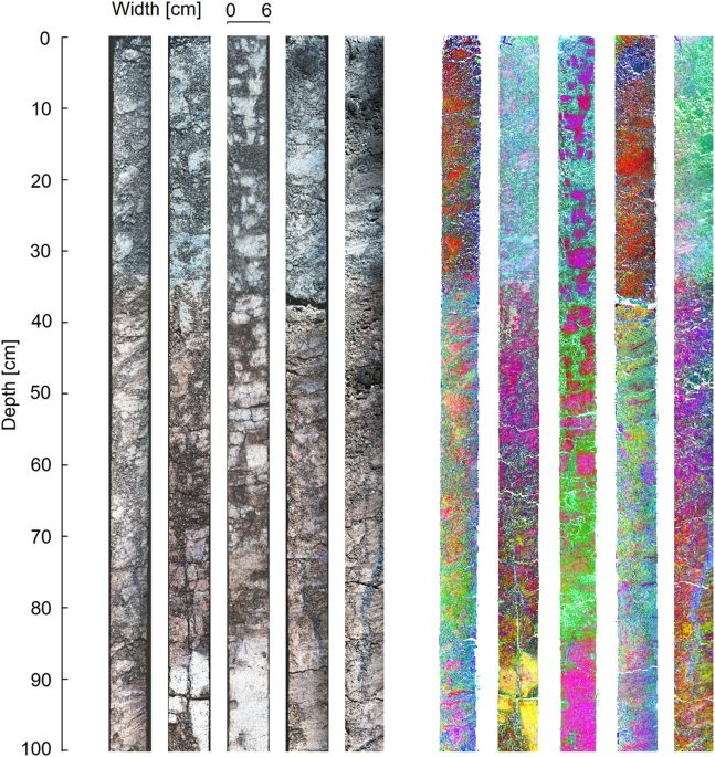 2538b122988 Hyperspectral images of the soil cores. Left  images normalized to  reflectance target with RGB bands rendered using three bands in the visual  range of the ...