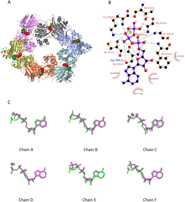 Structural Cycle Of The Thermus Thermophilus Pilf Atpase The