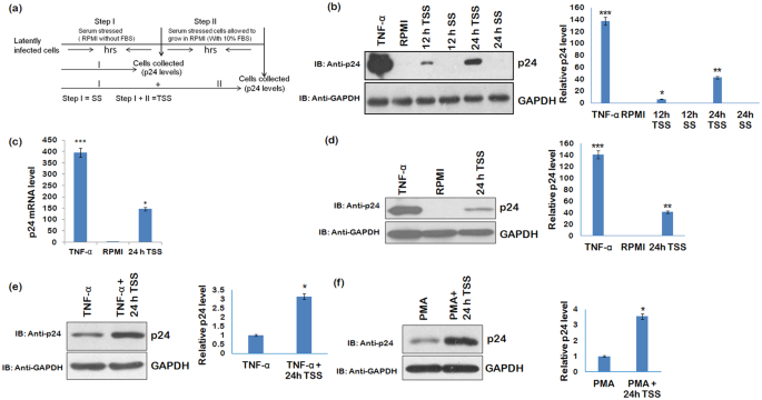 Serum deprivation/starvation leads to reactivation of HIV-1