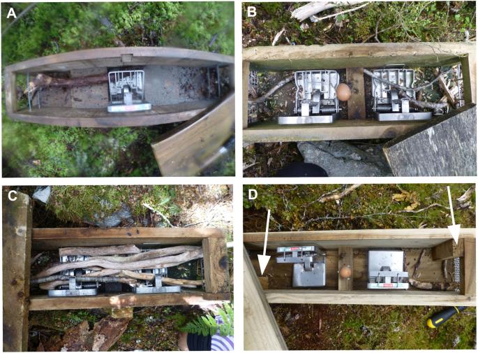 Habitual tool use innovated by free-living New Zealand kea