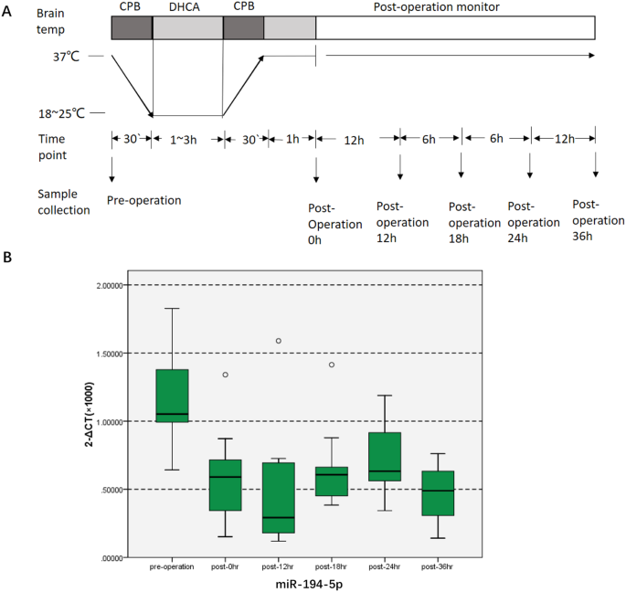 Microrna 194 5p levels decrease during deep hypothermic circulatory a diagrams illustrating the dhca procedure the blood samples were collected and mir 194 5p were analyzed preoperatively and at 0 h 12 h 18 h ccuart Choice Image