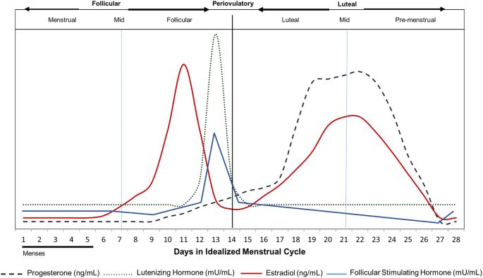 Menstrual cycle rhythmicity: metabolic patterns in healthy