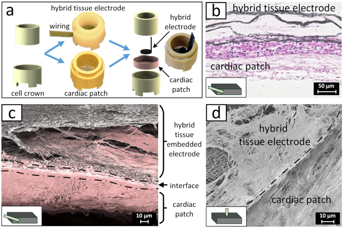 A Three Dimensional Hybrid Pacemaker Electrode Seamlessly Integrates
