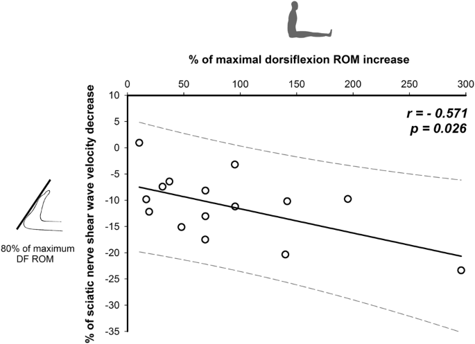 The Potential Role Of Sciatic Nerve Stiffness In The Limitation Of