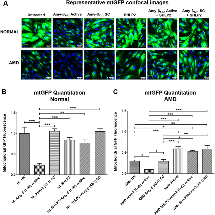 Characterizing the protective effects of SHLP2, a mitochondrial-derived peptide, in macular degeneration