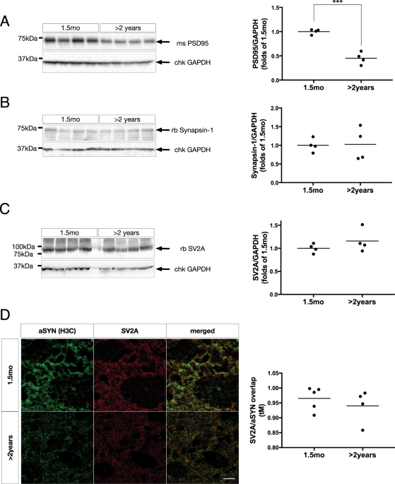 Lipid-dependent deposition of alpha-synuclein and Tau on neuronal Secretogranin II-positive vesicular membranes with age