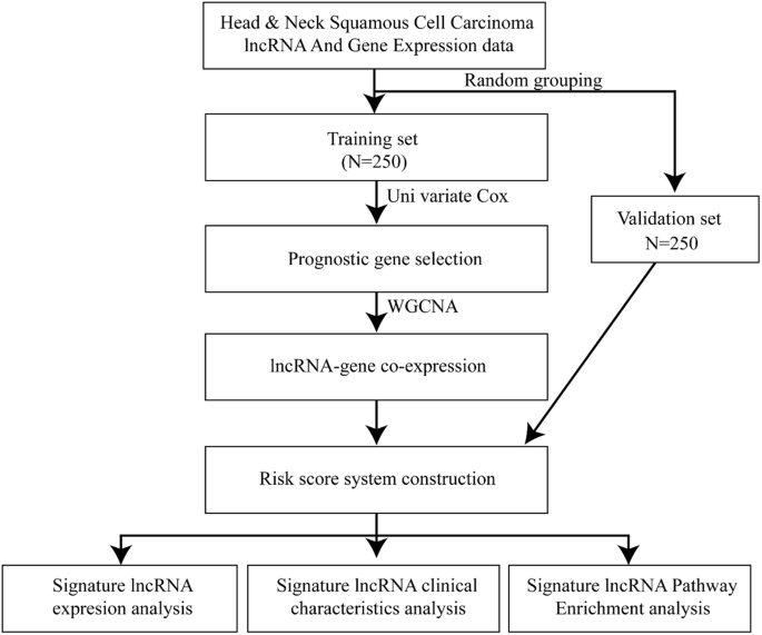 A Prognostic 5 Lncrna Expression Signature For Head And Neck Squamous Cell Carcinoma Scientific Reports
