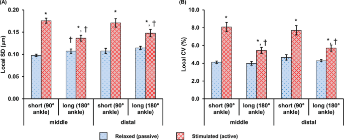 Single Sarcomere Contraction Dynamics In A Whole Muscle Scientific