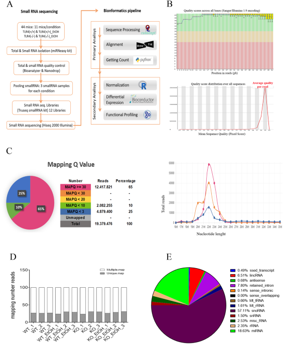 Deep Sequencing And Mirna Profiles In Alcohol Induced Neuroinflammation And The Tlr4 Response In Mice Cerebral Cortex Scientific Reports