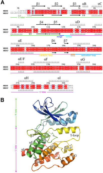 Identification And Antitumor Activity Of A Novel Inhibitor