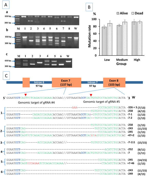 Effects Of Crisprcas9 Dosage On Ticam1 And Rbl Gene Mutation Rate