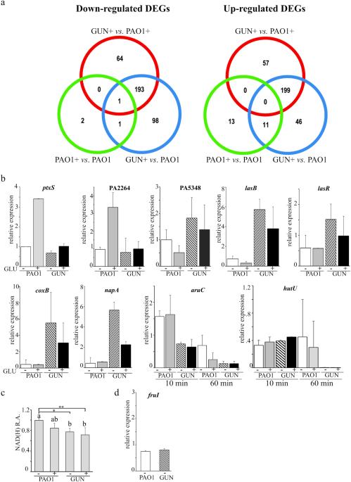 Pseudomonas Aeruginosa Mutants Defective In Glucose Uptake Have