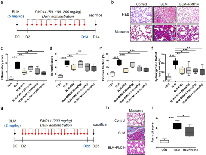 pm014 ameliorates pulmonary fibrosis induced by blm in mice  (a–f) mice  were administered intratracheally once with blm (5 mg/kg) at day 0 and  subsequently