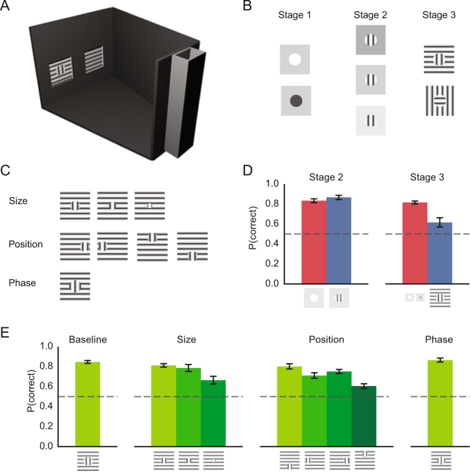 Figure-ground perception in the awake mouse and neuronal