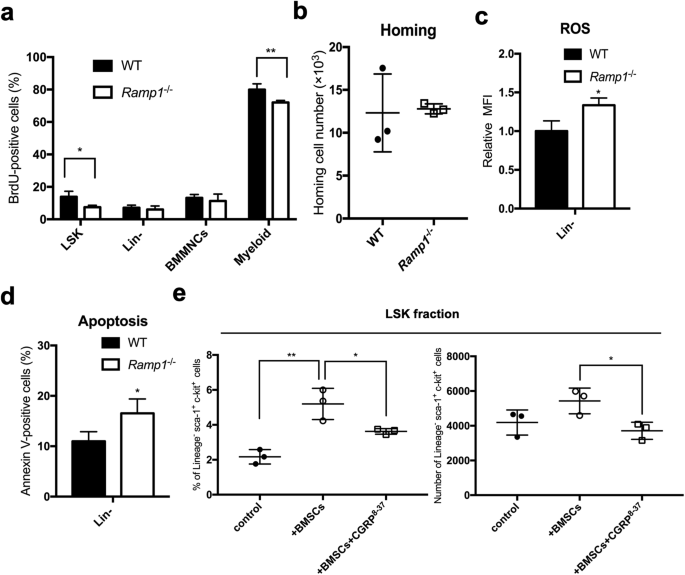 CGRP-CRLR/RAMP1 signal is important for stress-induced hematopoiesis