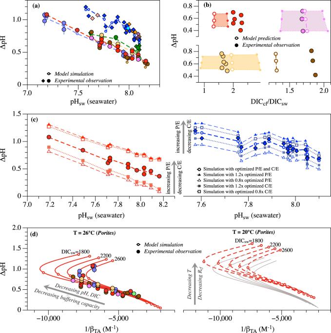 Seawater temperature and buffering capacity modulate coral calcifying pH