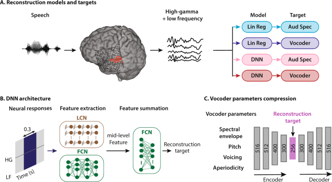 Towards Reconstructing Intelligible Speech From The Human Auditory