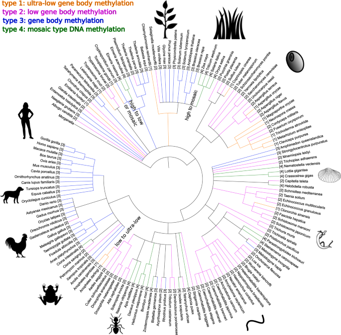 Universality of the DNA methylation codes in Eucaryotes