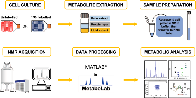 A Framework For Tracer Based Metabolism In Mammalian Cells By Nmr