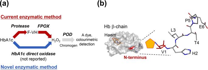 hämoglobin a1c